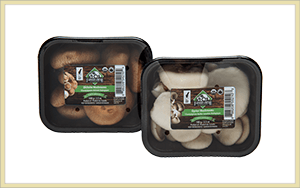 organic specialty mushrooms in 6oz packages